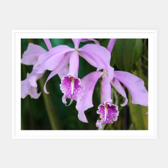 Thumbnail image of Tropical Flowers Orchids Framed poster, Live Heroes