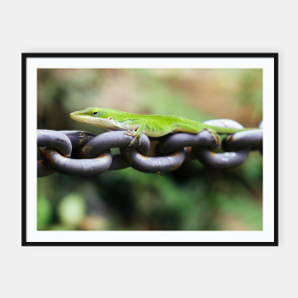 Miniaturka Anole on Chain Framed poster, Live Heroes