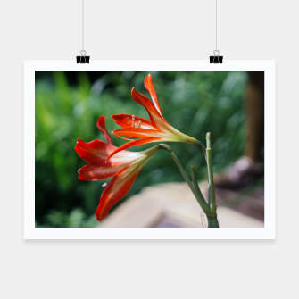 Miniatur Lilies Poster, Live Heroes