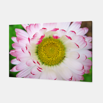 Miniatur Pink Daisy Canvas, Live Heroes