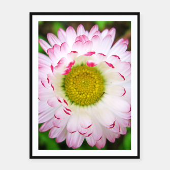 Miniatur Pink Daisy Framed poster, Live Heroes