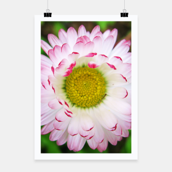 Miniatur Pink Daisy Poster, Live Heroes