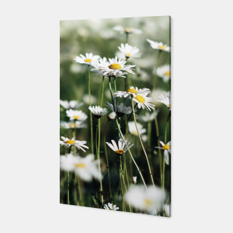 Thumbnail image of White Summer Daisies Flowers Canvas, Live Heroes