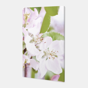 Apple Tree Blossoms Canvas miniature