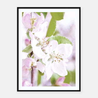 Apple Tree Blossoms Framed poster miniature