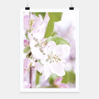 Apple Tree Blossoms Poster miniature