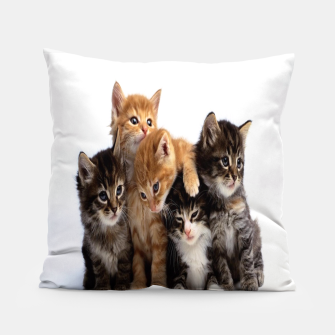 Thumbnail image of Cats, Live Heroes