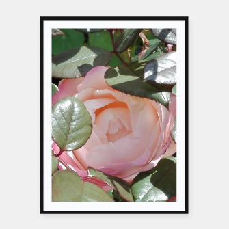 rose with leaves Plakaty w ramie  obraz miniatury