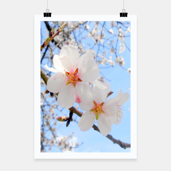 Thumbnail image of Blossoms Close-up Poster, Live Heroes