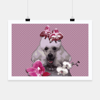 Miniatur  Pink poodle Poster, Live Heroes