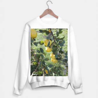 Thumbnail image of apples on a tree Bluza standard, Live Heroes