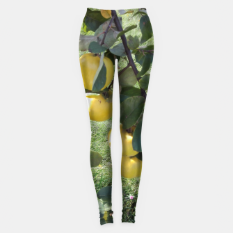 Thumbnail image of apples on a tree Legginsy, Live Heroes