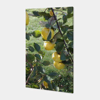 Thumbnail image of apples on a tree Canvas, Live Heroes