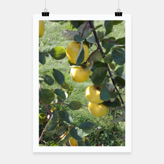 Thumbnail image of apples on a tree Plakat, Live Heroes
