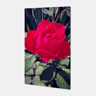 Thumbnail image of old rose Canvas, Live Heroes