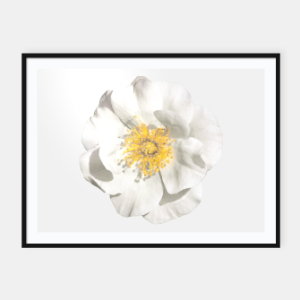 Miniature de image de White Flower Photo Framed poster, Live Heroes