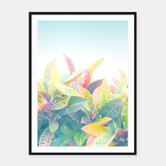 After the rain / Tropical Croton Leaves 4 Framed poster thumbnail image