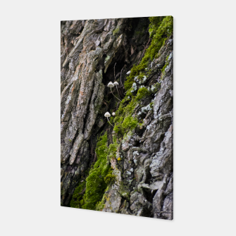 Thumbnail image of Tree trunk and mushrooms Canvas, Live Heroes