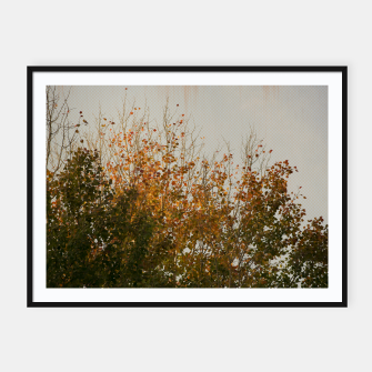 Thumbnail image of Signs of autumn Framed poster, Live Heroes