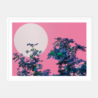 Thumbnail image of Rowan tree and pink sky Framed poster, Live Heroes