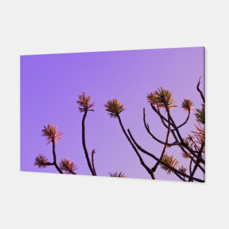Thumbnail image of Pine tree branches Canvas, Live Heroes