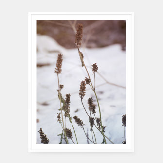 Thumbnail image of Plants in the snow Framed poster, Live Heroes