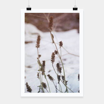 Miniaturka Plants in the snow Poster, Live Heroes