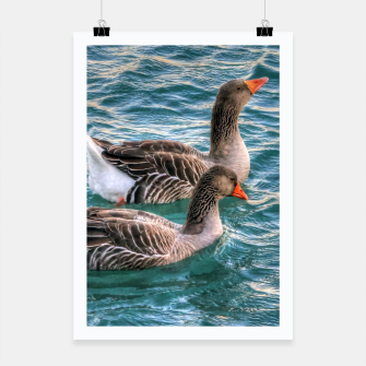 Miniaturka Cute three geese birds swimming in the pond on a beautiful summer day Poster, Live Heroes