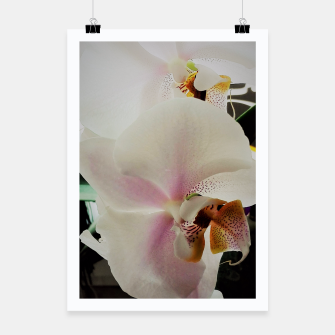 Thumbnail image of orchid white&pink Plakat, Live Heroes