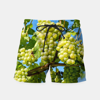 Miniaturka Delicious growing green grapes bunch farming on a beautiful blue summer sky background Swim Shorts, Live Heroes
