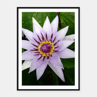 Thumbnail image of Lily flower Framed poster, Live Heroes
