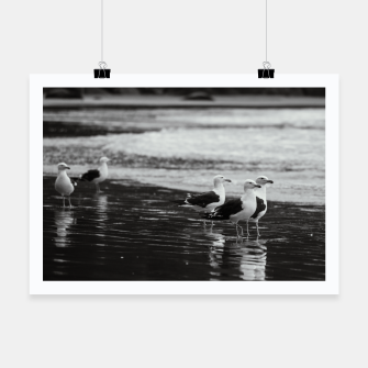 Miniatur Seagulls by the sea Poster, Live Heroes