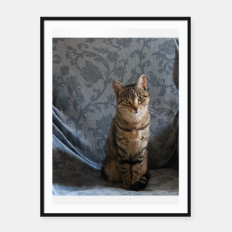 Miniatur Kitty posing Framed poster, Live Heroes