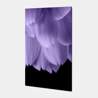 Thumbnail image of Ultra violet purple flower petals black Canvas, Live Heroes