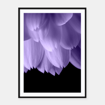 Thumbnail image of Ultra violet purple flower petals black Framed poster, Live Heroes