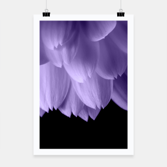 Thumbnail image of Ultra violet purple flower petals black Poster, Live Heroes