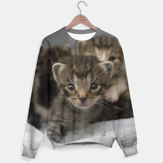 Miniatur Photo of a group of cuddly kittens Sweater, Live Heroes