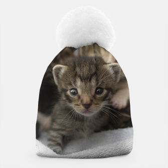 Miniatur Photo of a group of cuddly kittens Beanie, Live Heroes