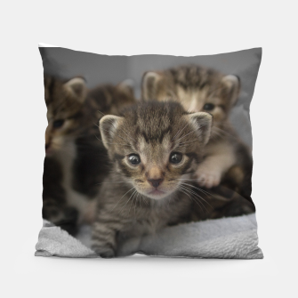 Miniatur Photo of a group of cuddly kittens Pillow, Live Heroes