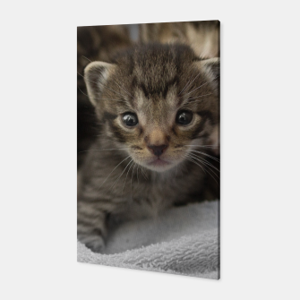 Miniatur Photo of a group of cuddly kittens Canvas, Live Heroes