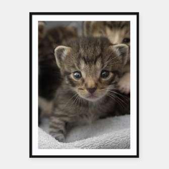 Miniatur Photo of a group of cuddly kittens Framed poster, Live Heroes