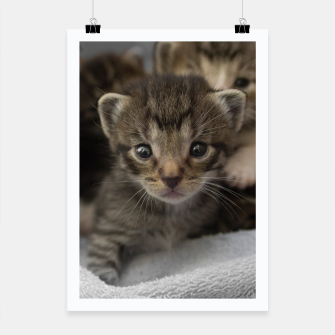 Miniatur Photo of a group of cuddly kittens Poster, Live Heroes