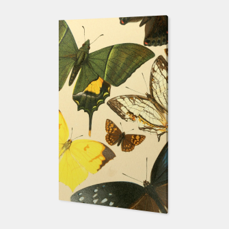 Thumbnail image of Royal Natural History 1893-1896 - Butterflies Canvas, Live Heroes
