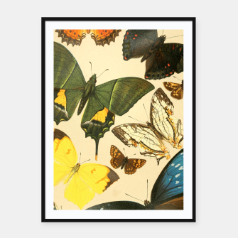 Thumbnail image of Royal Natural History 1893-1896 - Butterflies Framed poster, Live Heroes