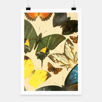 Thumbnail image of Royal Natural History 1893-1896 - Butterflies Poster, Live Heroes
