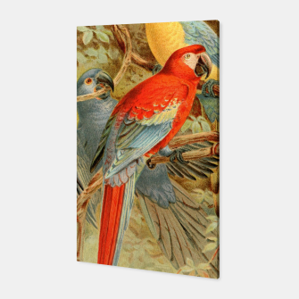 Thumbnail image of  Royal Natural History 1893-1896 - JCK (Macaws) Canvas, Live Heroes