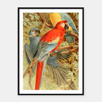 Thumbnail image of  Royal Natural History 1893-1896 - JCK (Macaws) Framed poster, Live Heroes