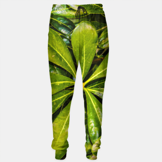 Thumbnail image of Top View Leaves Photo Cotton sweatpants, Live Heroes