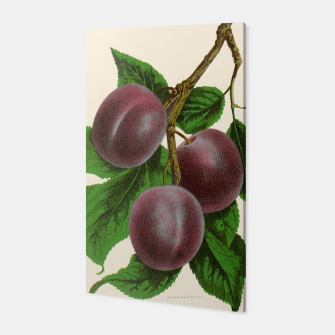 Thumbnail image of  Canadian Horticulturalist 1888-96 - Fellemburg Plums Canvas, Live Heroes