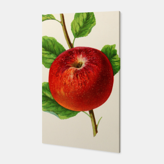 Thumbnail image of  Canadian Horticulturalist 1888-96 - Hubbardston Nonsuch Apple Canvas, Live Heroes